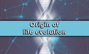 Origin of life evolution