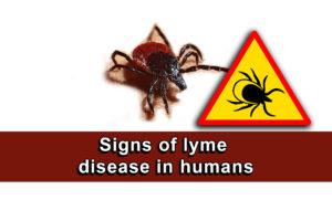 Signs of lyme disease in humans