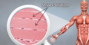 Striations of Stripes